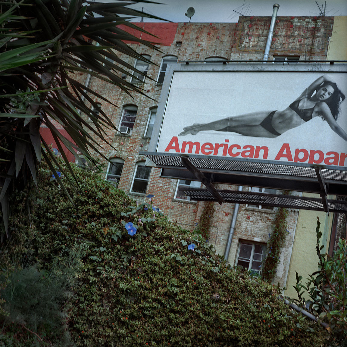 08-TheAmericanApparel-ThomasAlleman-Website-092214