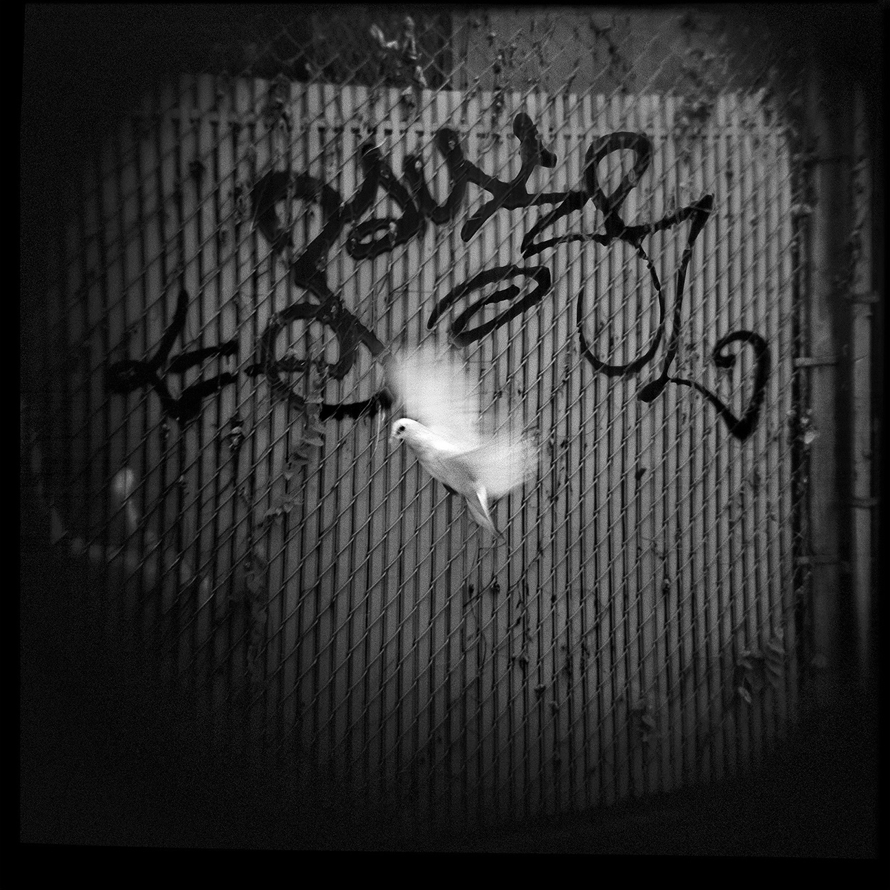 12-NYC-HOLGA-QD-Oct2014-FACEBOOK
