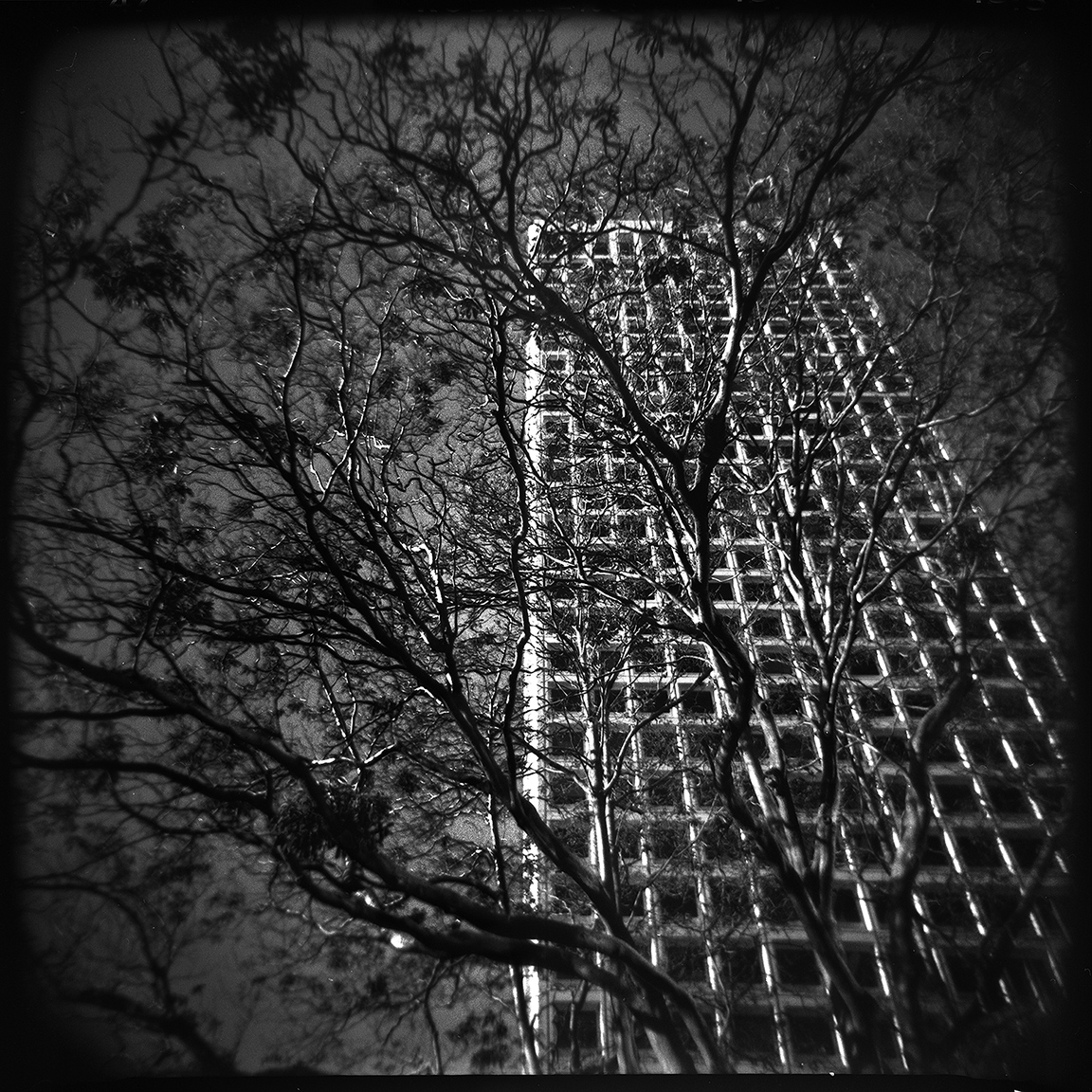 14-SF-HOLGA-WEBSITE-060314