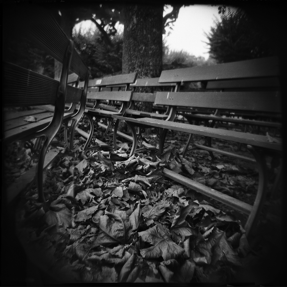 15-SF-HOLGA-WEBSITE-060314
