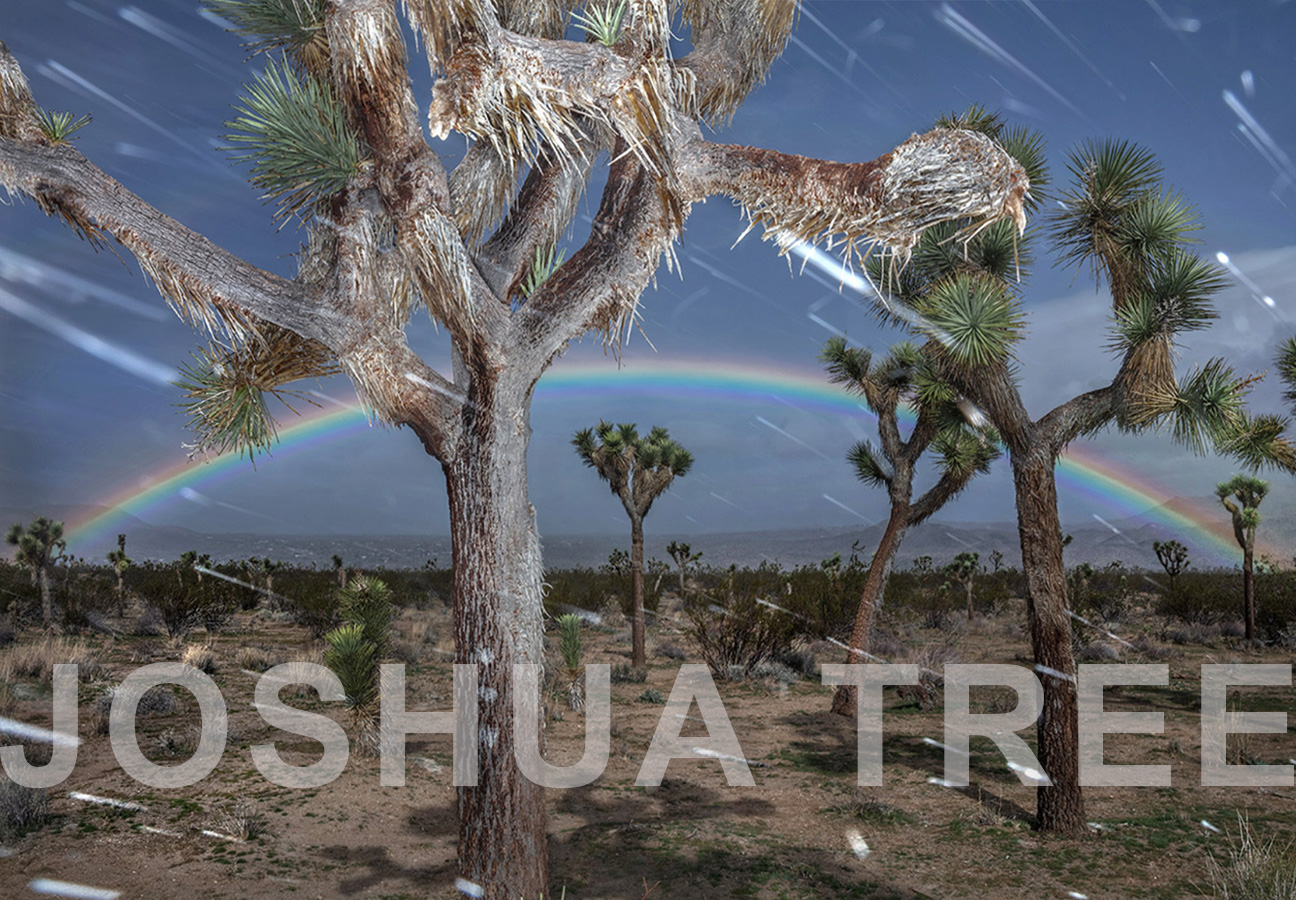 JOSHUATREE-TITLE-Website-Powerpoint-March2019