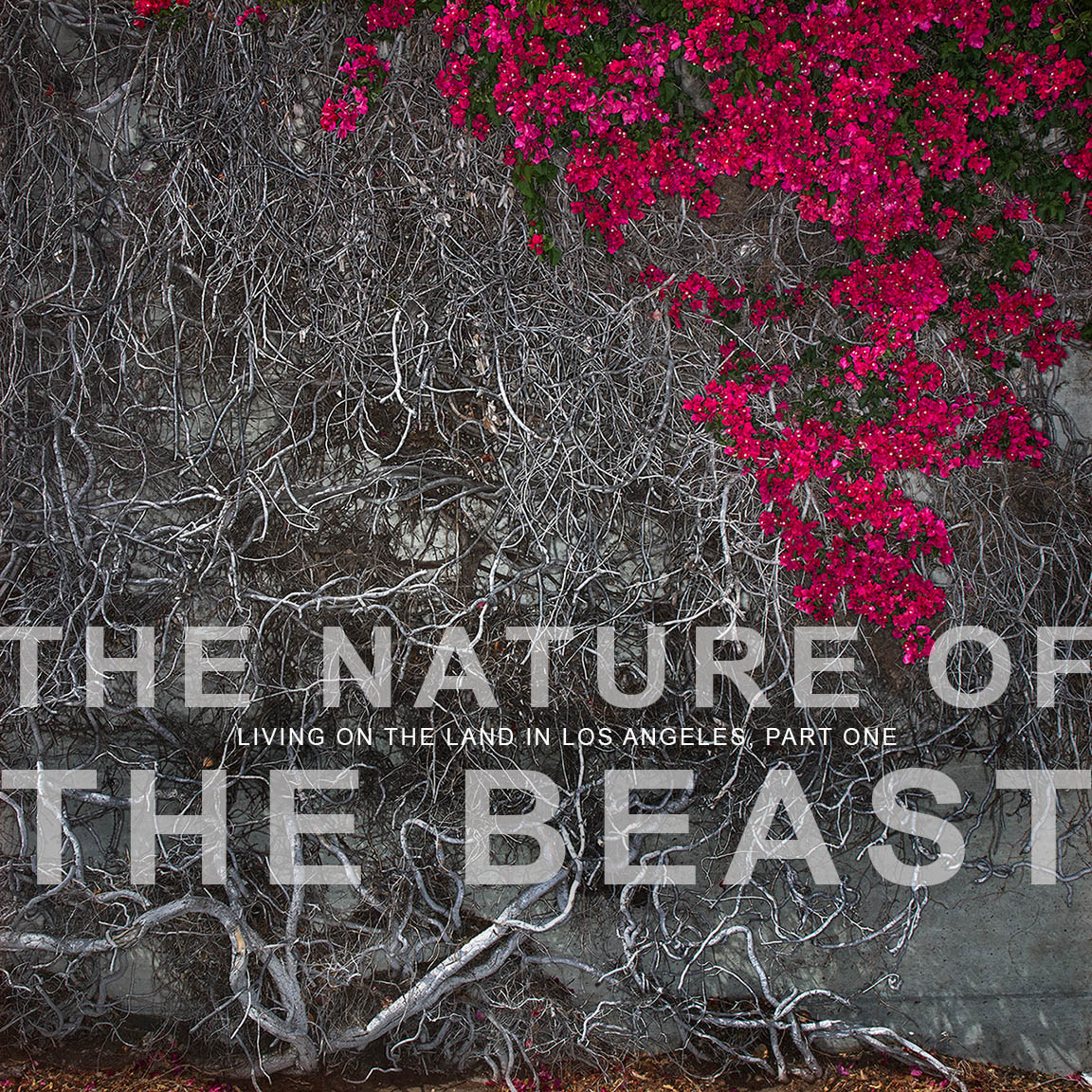 WEBSITE-OPENER-TheNatureOfTheBeast-ThomasAlleman-May2017-WEBSITE-V3